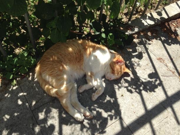 Katt i Pisa