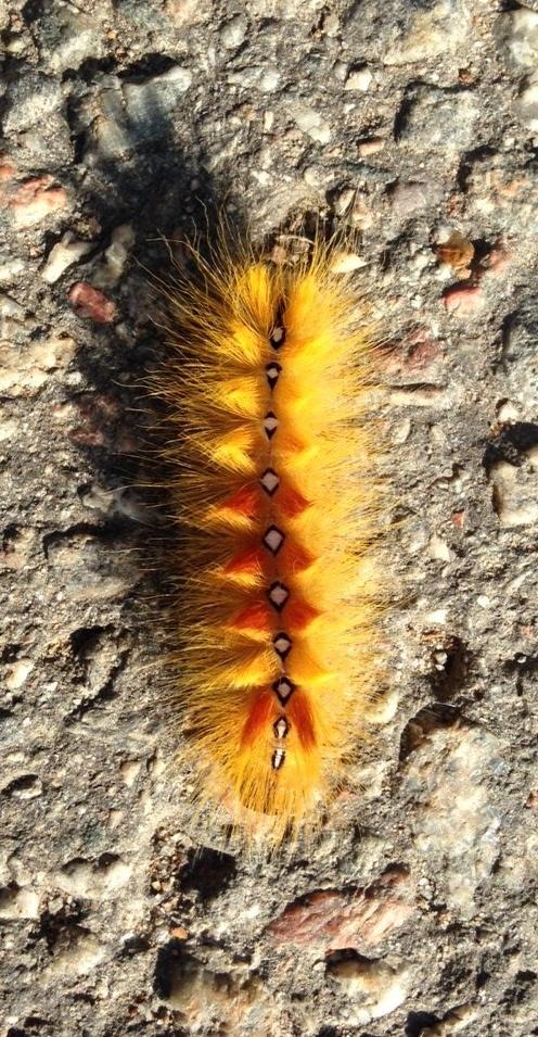 larv2