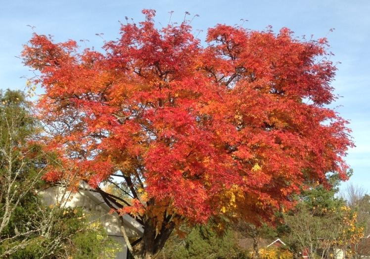 sprakande träd