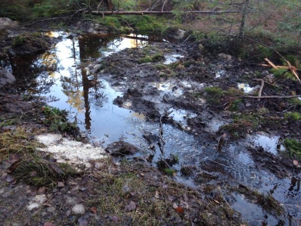 vatten i skogen