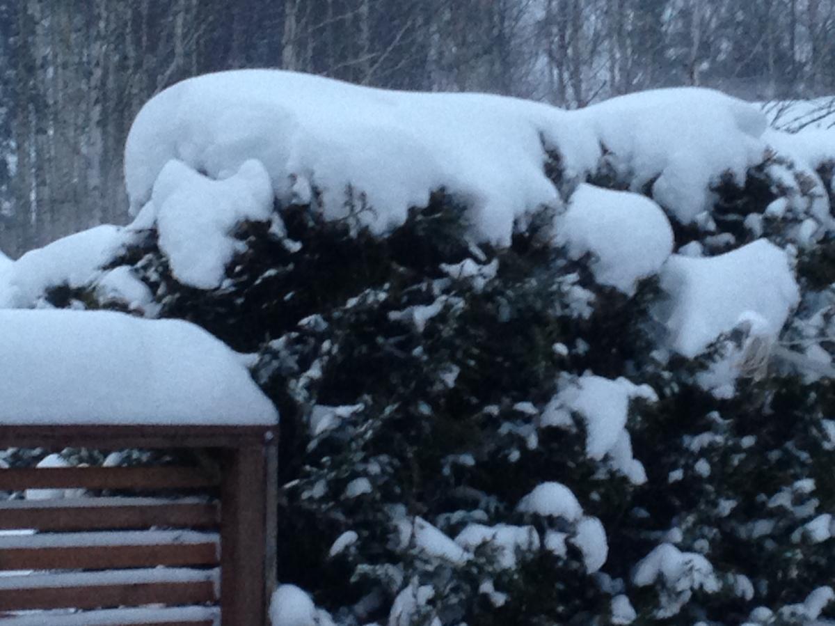 11 jan snow.JPG