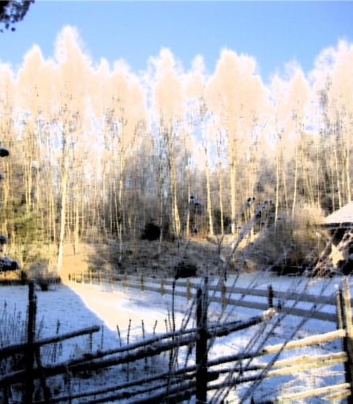 vinter 2009.jpg