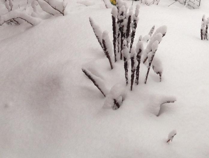 snow 7mars3.jpg